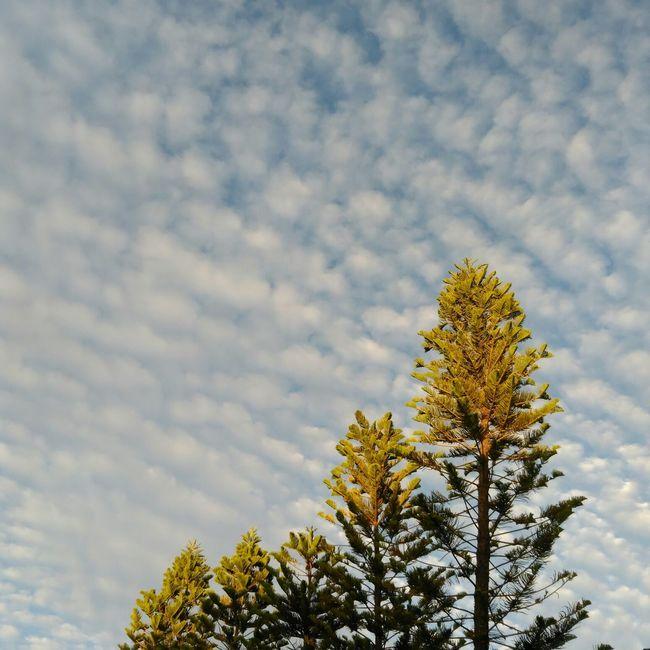 昆明 冬天 看云