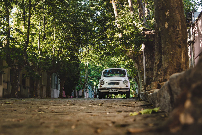 The cars of Colonia del Sacramento. Classic Cobblestone Streets Latin America Low Angle View Road Sidewalk Travel Boardwalk Cobblestone Day Explore Growth Historic Mini Nature No People Old Oldtimer Outdoors Puch South America Street Travel Destinations Tree Tree Trunk