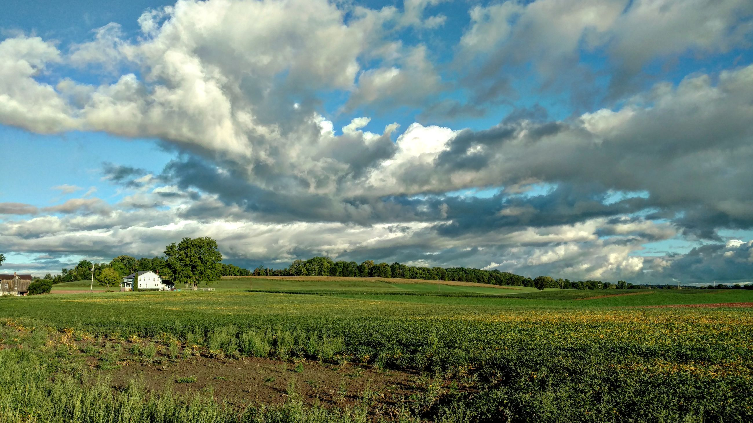 agriculture, field, landscape, rural scene, tranquil scene, scenics, farm, beauty in nature, tranquility, crop, growth, sky, cultivated land, nature, plant, cloud - sky, green color, cloudy, day, blue, plantation, outdoors, no people, cumulus cloud, green, solitude, cultivated, farmland, non-urban scene, agricultural, grass area