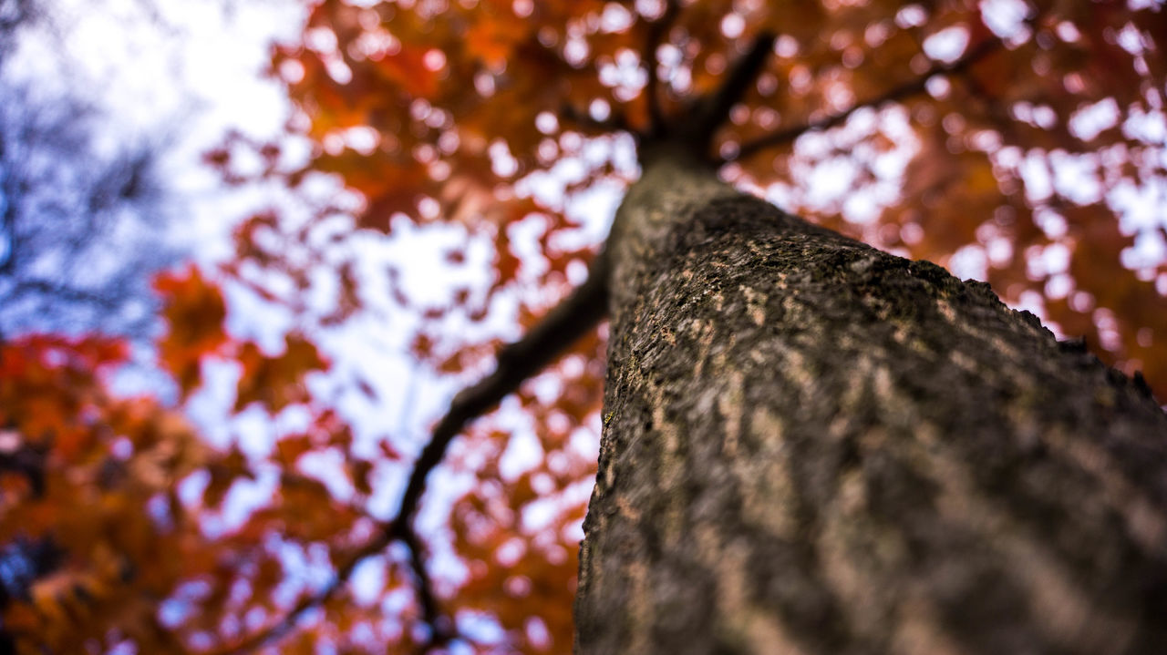 tree trunk, tree, wood - material, textured, nature, day, branch, low angle view, bark, no people, close-up, growth, outdoors, beauty in nature