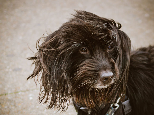 Animal Themes Close-up Day Dog Domestic Animals Fur Mammal No People One Animal Outdoors Pets Sky Stormy Weather Windy Day