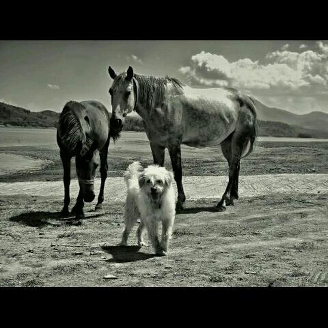 Check This Out Dog &horses Blackandwhite Photography