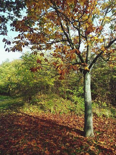 Autumn in Oxie