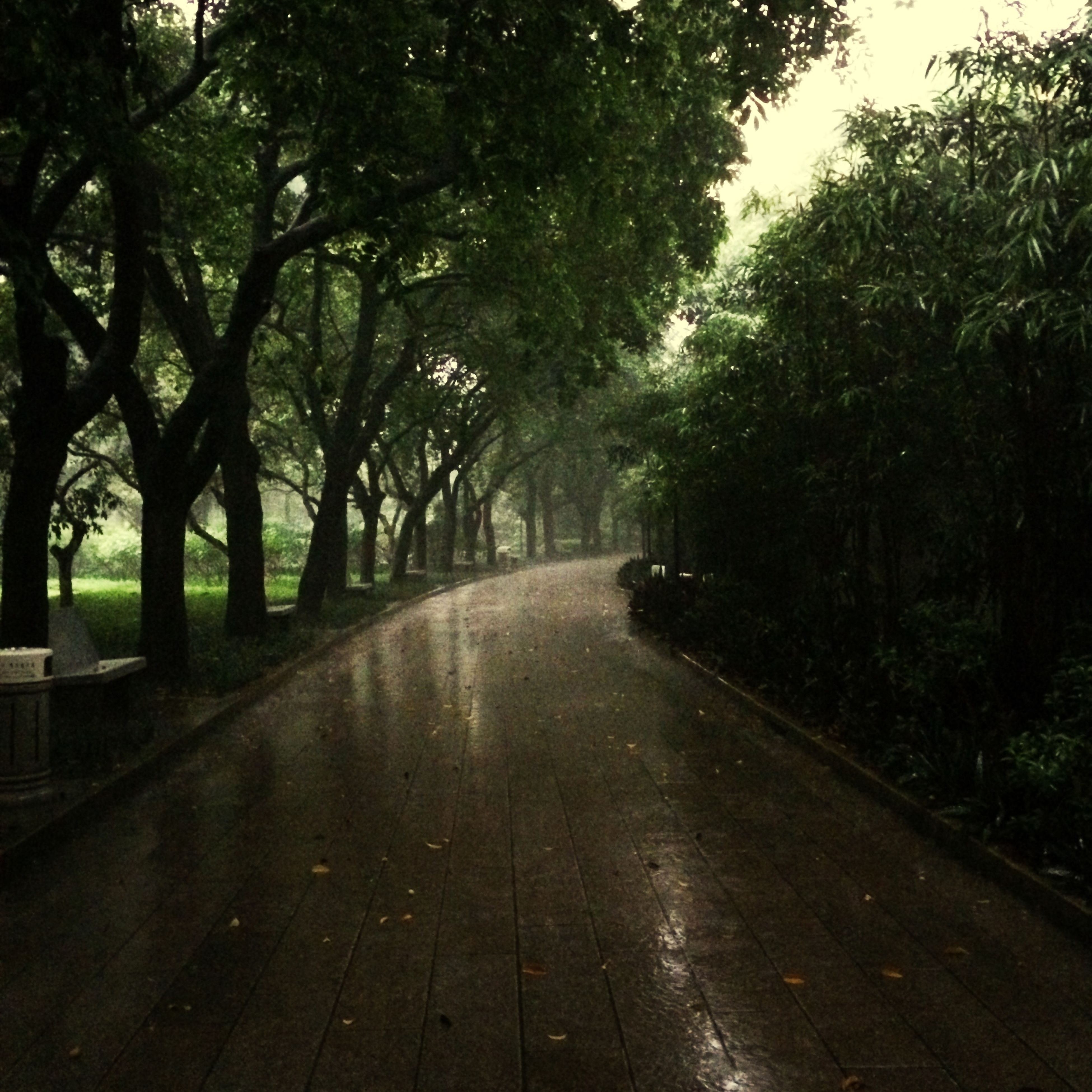 the way forward, tree, diminishing perspective, vanishing point, road, tranquility, treelined, nature, growth, transportation, empty road, tranquil scene, street, footpath, beauty in nature, forest, day, no people, outdoors, empty