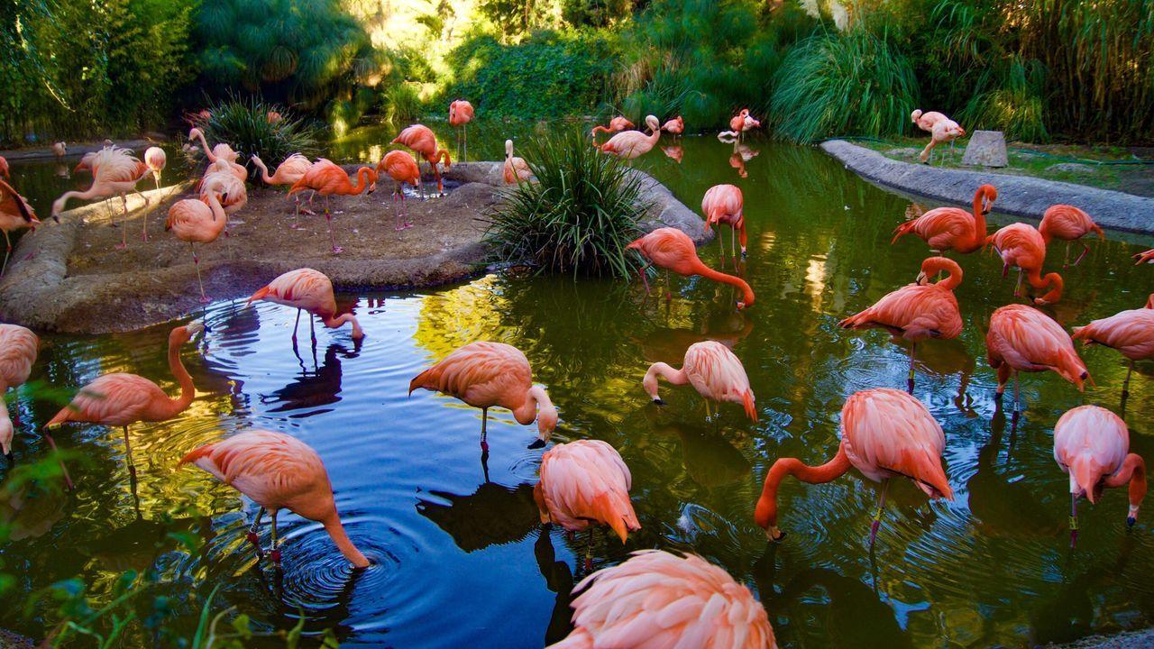 Flamingos. Large Group Of Animals Water Day Flamingos Parvada Swimming EyeEmNewHere