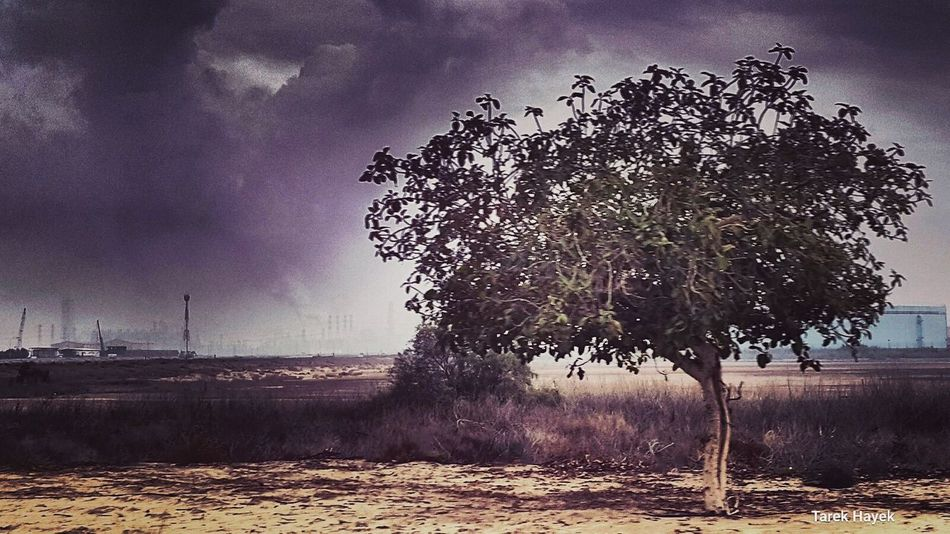What We Revolt Against Photooftheday Trees Peace Photo Stormy Creative Oilindustries Cloud Storm Storms Photoshoot Colorfull Followme Photographer Landscape Love Sky Skyline Like4like Stormysky Oilandgas Photographie  EyeEm Nature Lover Check This Out