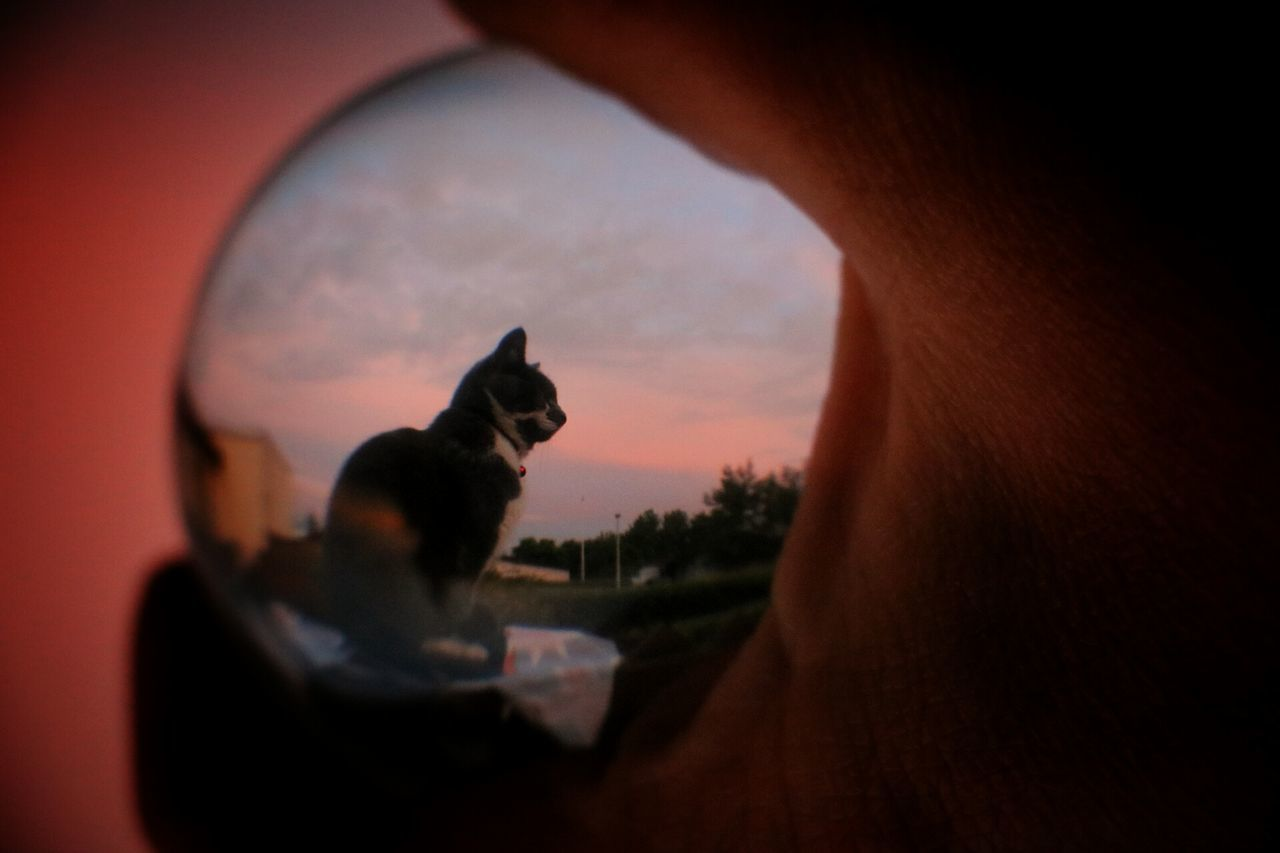 Cat Photography Captured Moment Glassball_photos Cat In The Glassball Glassballphotography Glassball Cats Of EyeEm Cat Lovers Catportrait