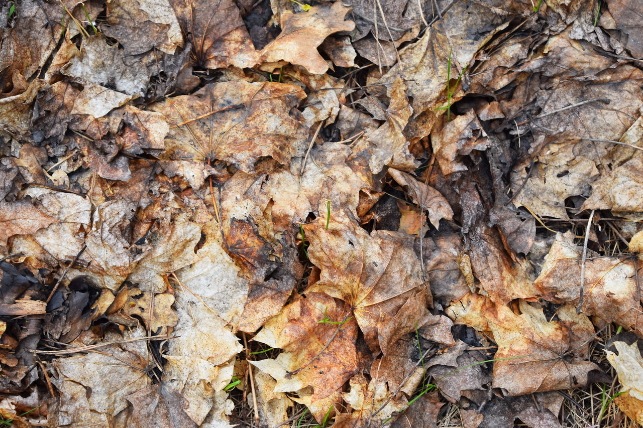 After the forest fire, burnt leaves on the ground After The Fire Autumn Leaves Burnt Fallen Leaves Forest Forest Fire Grass Leaves Needles Spot Pattern Pieces Pastel Power