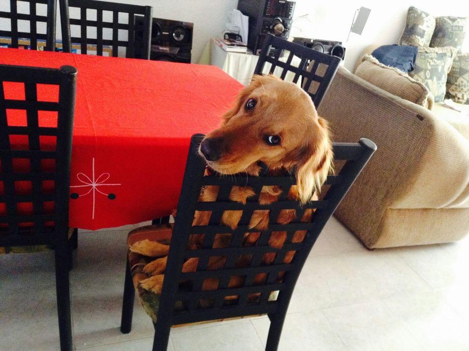 Cute Pets I Love My Dog Zaashila LaMejorPerra Perrafeliz