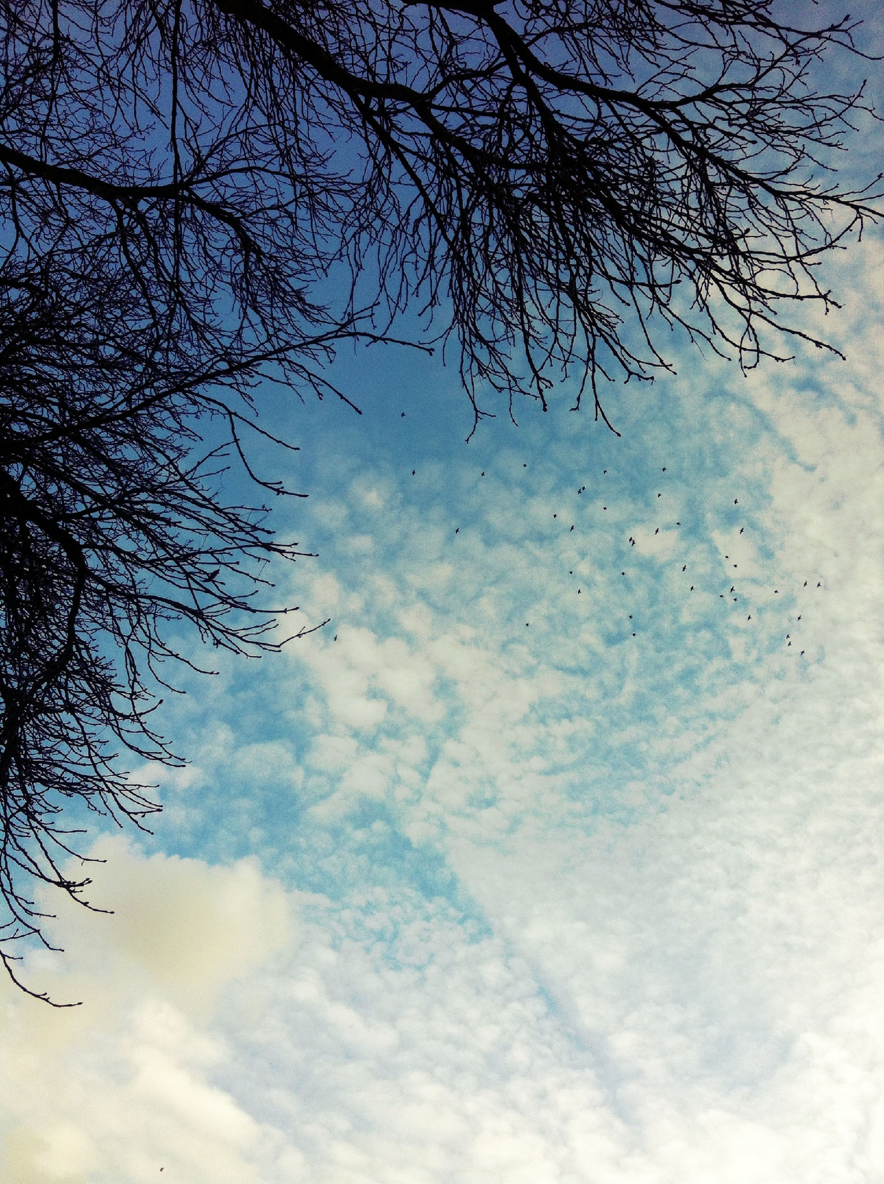 low angle view, sky, tree, cloud - sky, branch, bare tree, nature, tranquility, cloudy, beauty in nature, cloud, scenics, day, outdoors, no people, tranquil scene, growth, silhouette, backgrounds, weather