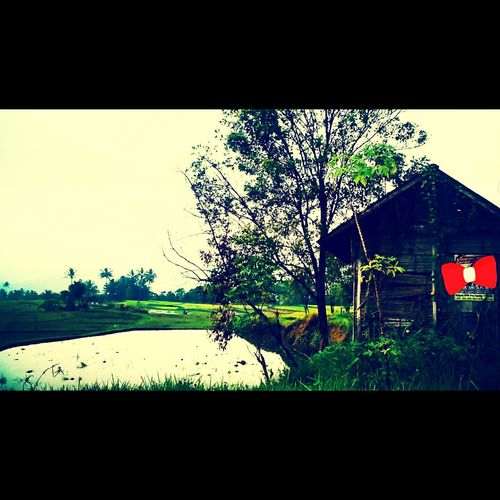 Hello World 😚 Thisismyworld My Village Batusangkar Padang INDONESIA Taking Photos