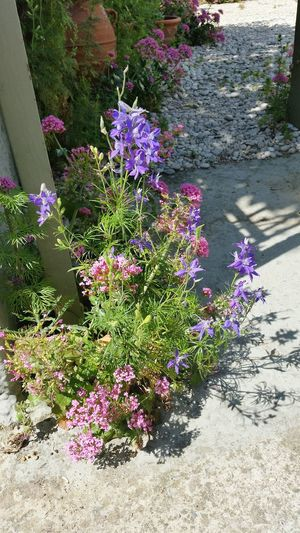 Wild flowers of Spetses The Best From Holiday POV Island Of Spetses Greek Islands Summer Views Perfect Vacantion!!! Spetses Greece Flowers,Plants & Garden Flower Collection