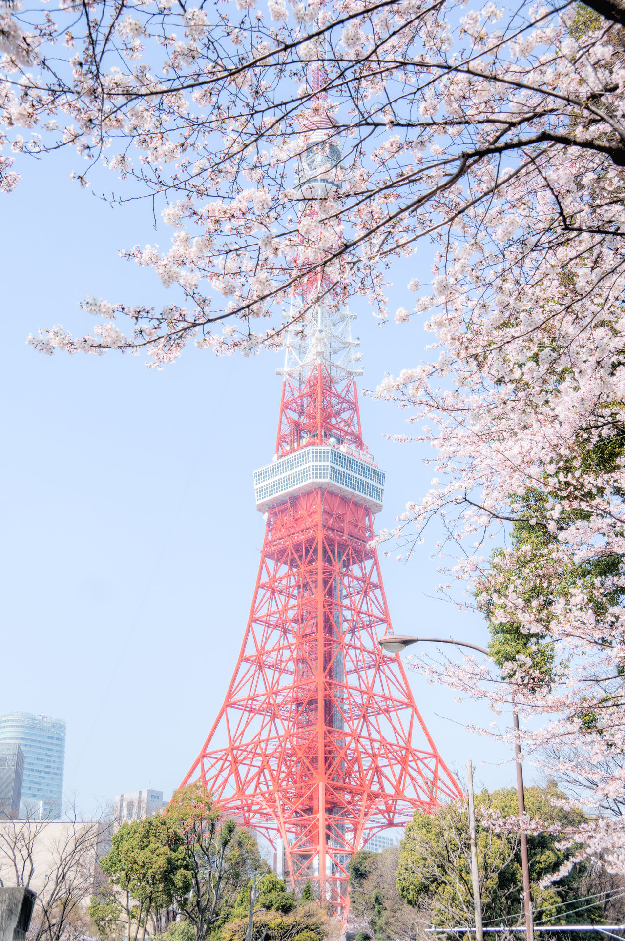 Architecture Building Exterior Built Structure Clear Sky Direction Environmental Conservation Guidance History International Landmark Lighthouse Low Angle View No People Outdoors Protection Religion Safety Sakura Tall Tall - High Tokyo Tokyo Tower Tower 東京タワー
