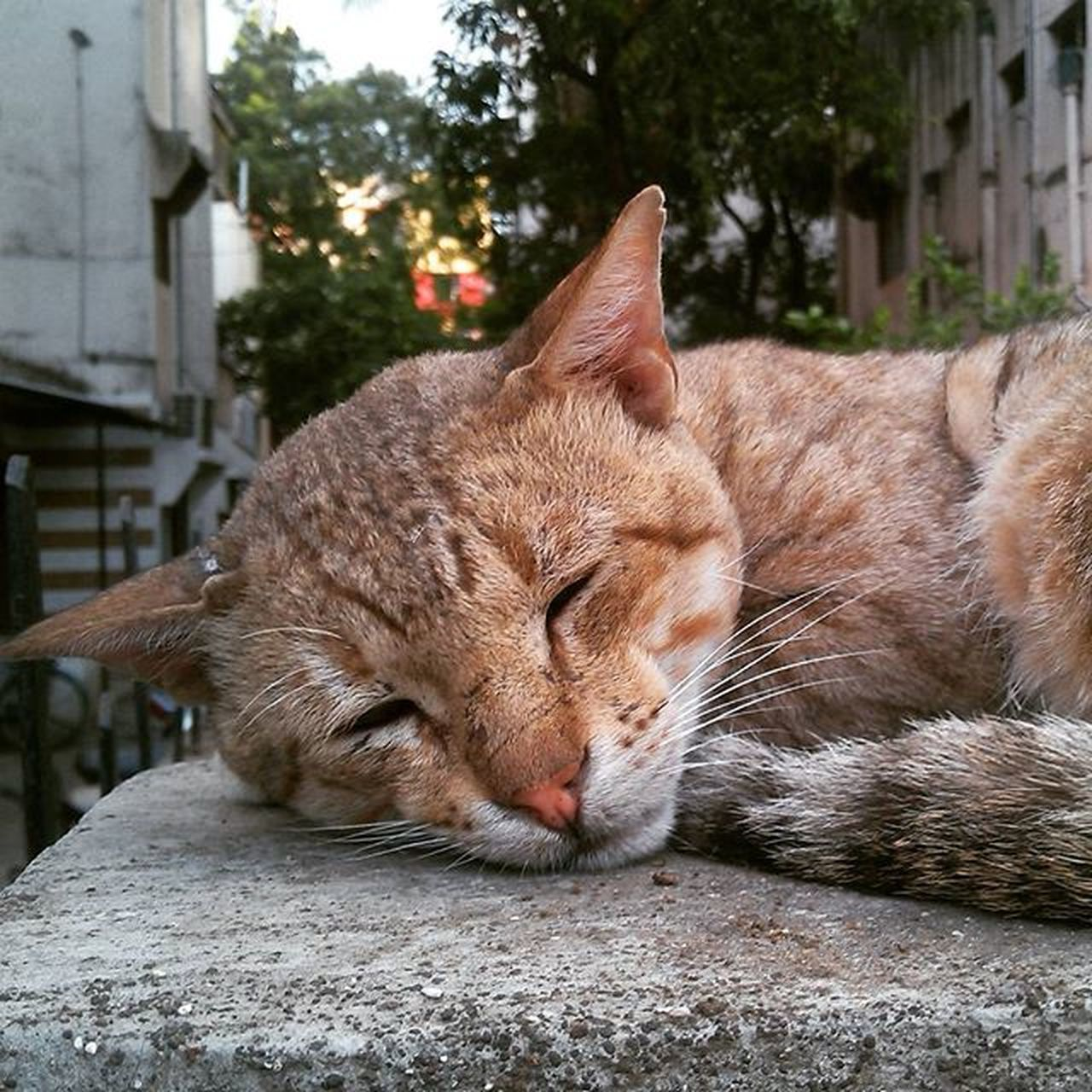 Cat Sleeping Like_a_king