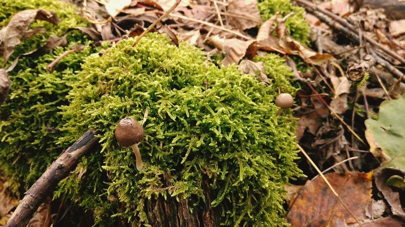 Nature Growth Fungus Beauty In Nature Outdoors Day No People Plant Close-up Leaf Grass Freshness
