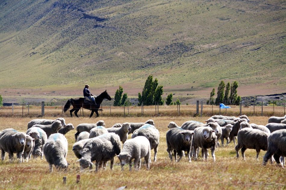 Beautiful stock photos of cowboy, Animal, Countryside, Cowboy, Farm