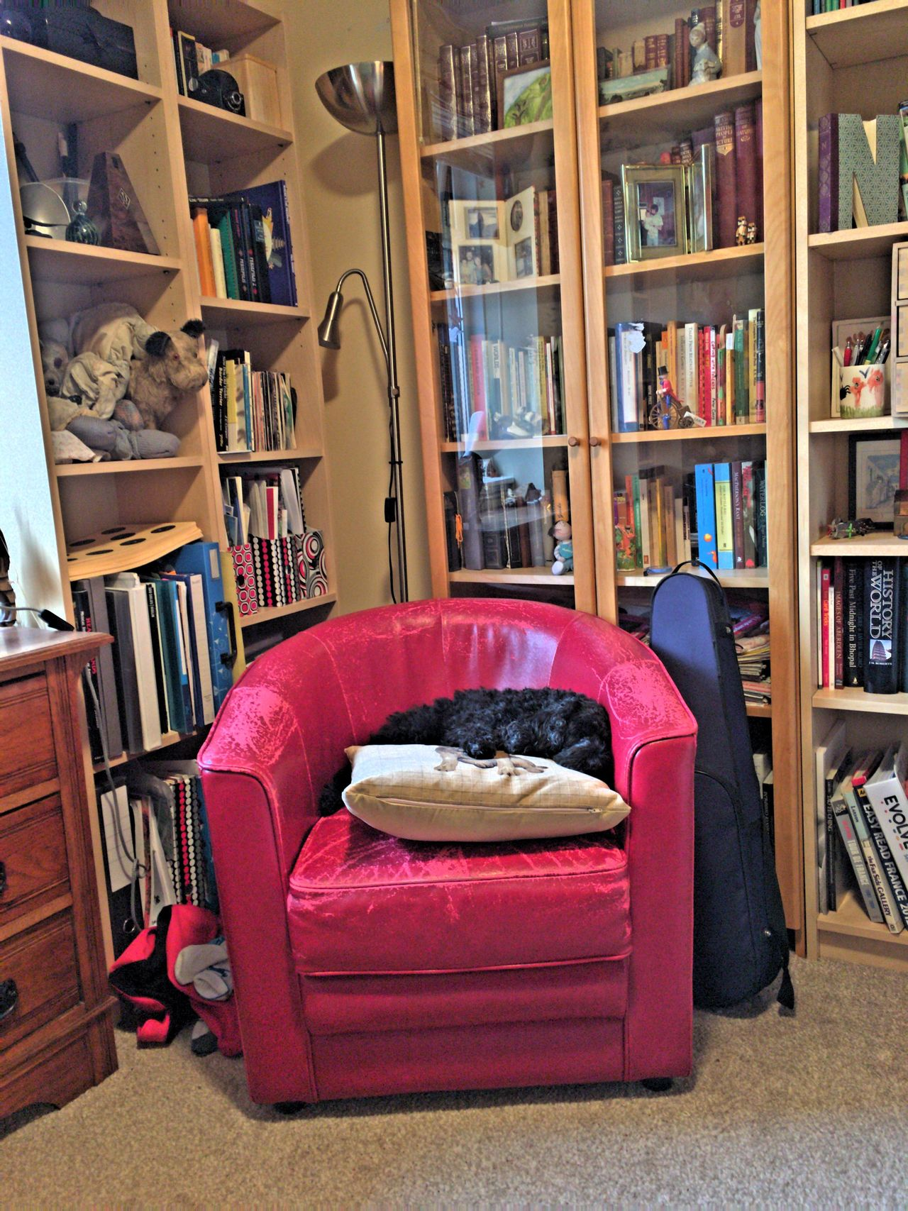 Spoodle Snoozing Study 3XSPUnity Home Interior Bookshelf Library Room Decor RoomPhotography Room Fiddle