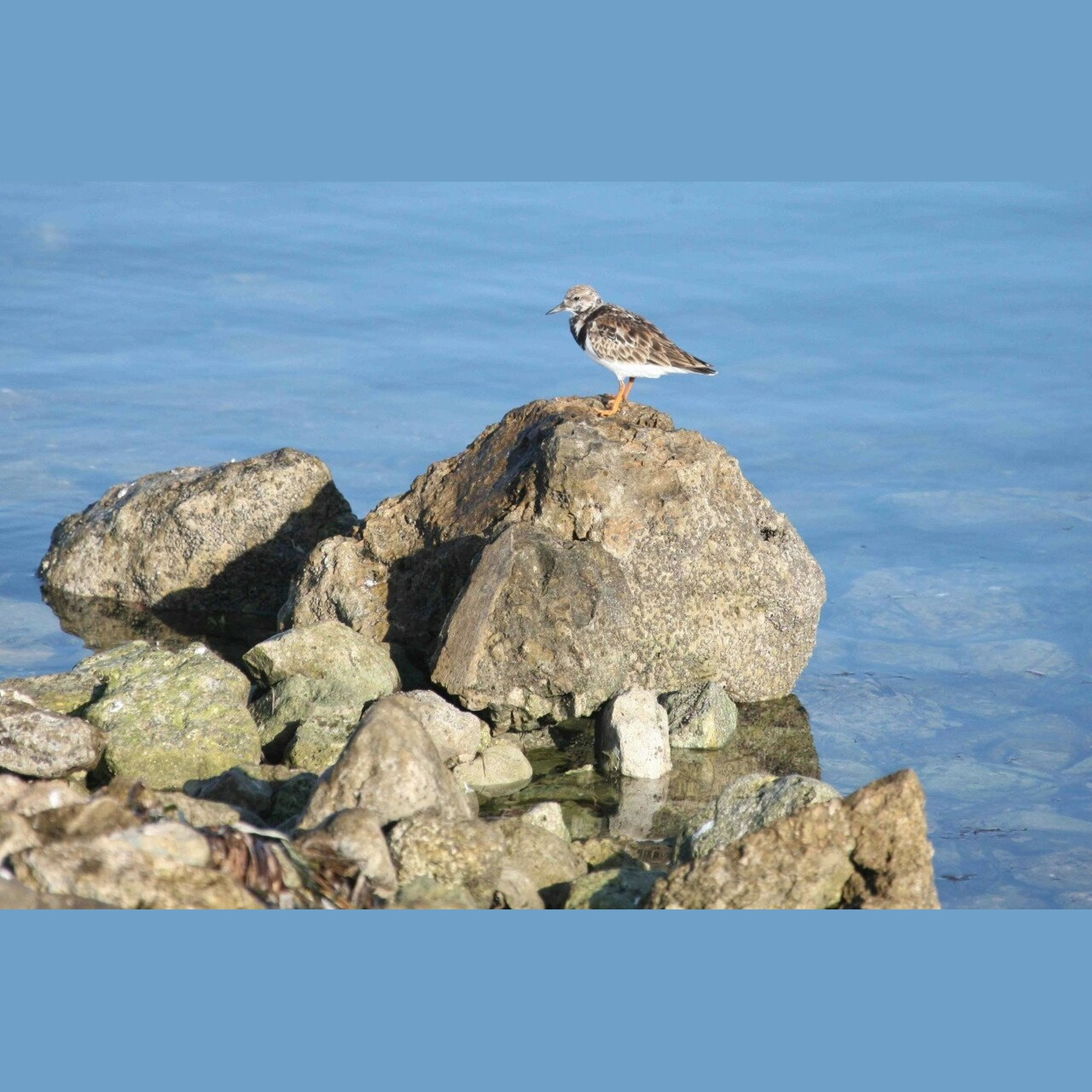 animal themes, animals in the wild, sea, wildlife, bird, one animal, rock - object, water, seagull, rock, blue, nature, rock formation, perching, full length, beauty in nature, horizon over water, clear sky, tranquility, day