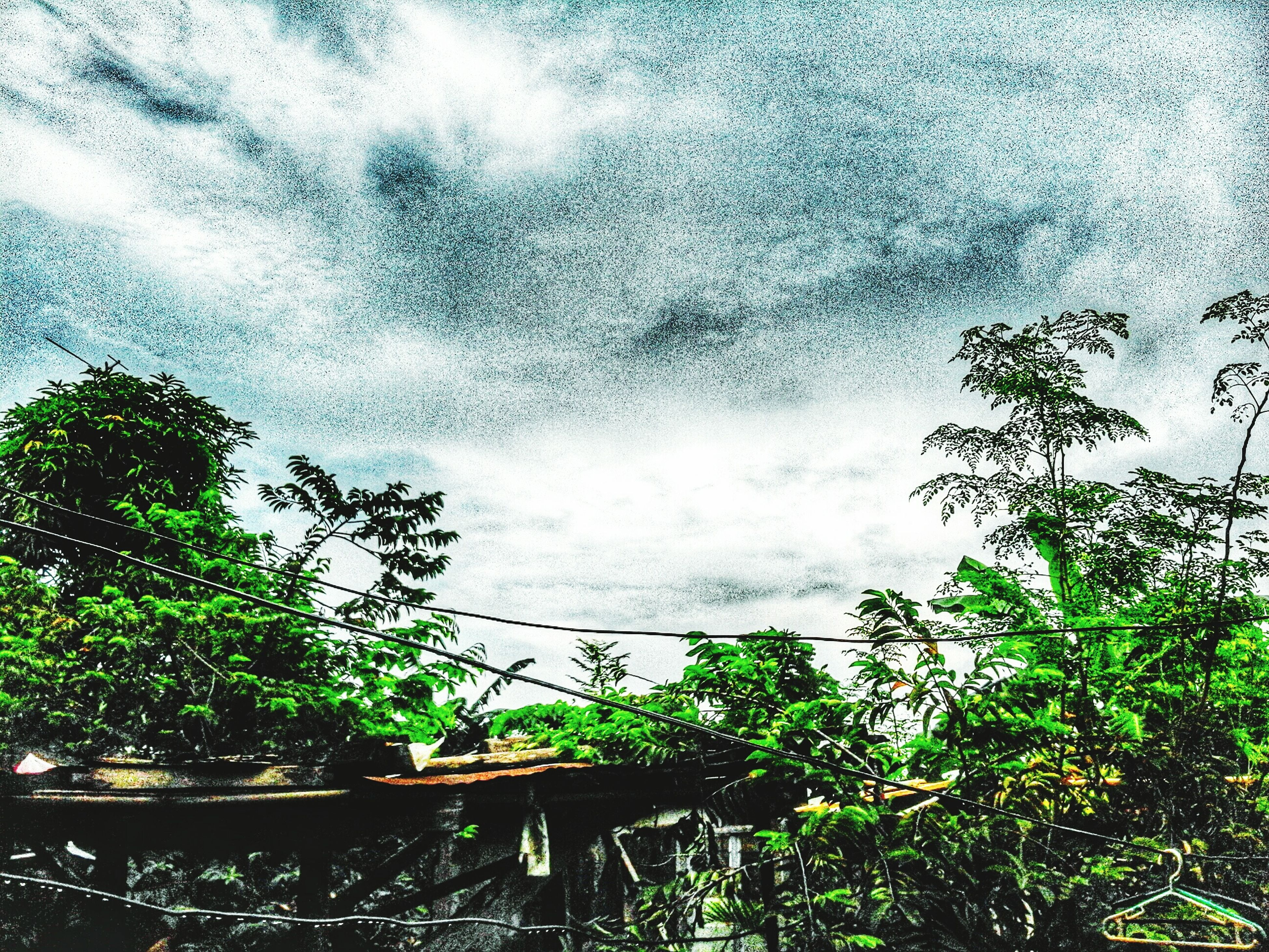 sky, cloud - sky, tree, cloudy, weather, nature, growth, cloud, water, window, glass - material, day, low angle view, plant, beauty in nature, built structure, overcast, no people, outdoors, railing