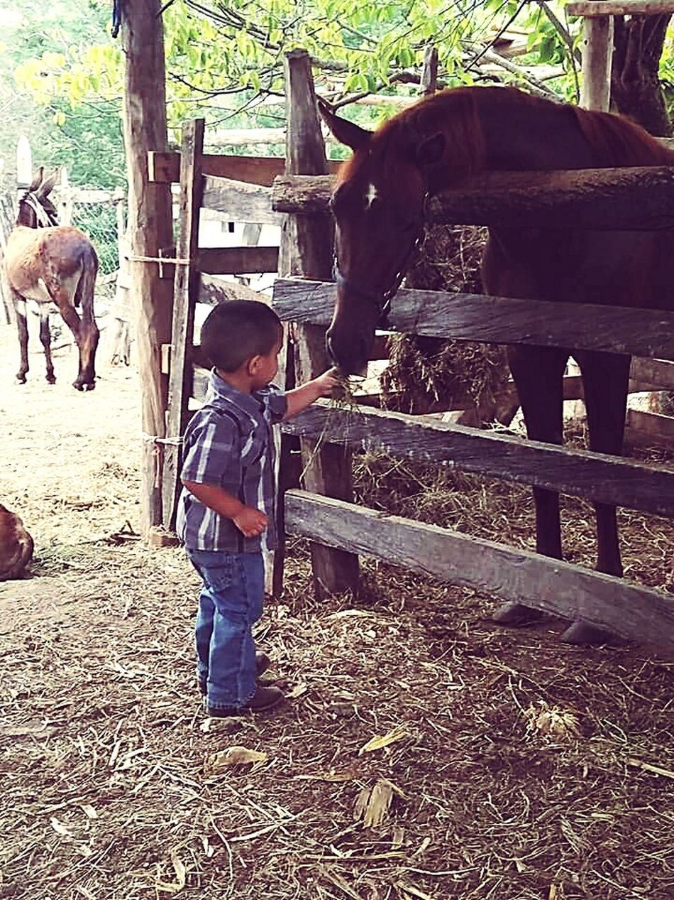 Baby Cousin Horses Ranch Donkey Mexico SanLuispotosi Mirancho❤️ Green Stables Growing Up