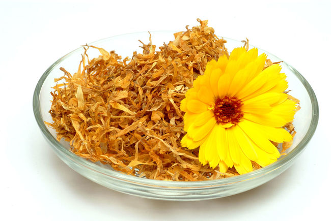 Medicinal plant Calendula officinalis, blossom Arrangement Beauty In Nature Blossom Calendula Calendula Flowerheads Calendula Flowers Calendula Officinalis Circle Close-up Flower Flower Head Fragility Freshness Large Group Of Objects Medicinal Plant Medicinal Plants Nature No People Petal Serving Size Single Flower Studio Shot Vibrant Color White Background Yellow