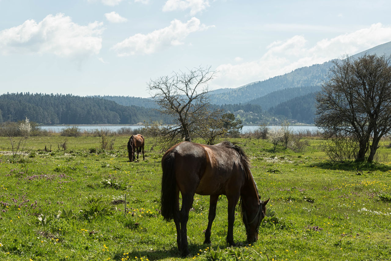 The scenic beauty of Lake Abant with horses grazing in the early morning. Calm, Serene, Tranquil, Relaxed, Grass Graze, Eat, Feeding, Grass, Horse, Pony, Colt, Animal, Animals, Mane, Mammal Image, Mirror , Reflection Livestock, Herbivorous, Domestic, Animal, L Mountains, Hills, Nature, Lake, Water, Trees, Grass, Outdoors Pond, Pool, Tarn, Reservoir, Slough, Lagoon, Water, Waterhole, Watering Hole, Inland Sea Scenic, Picturesque, Pretty, Pleasing, Attractive, Lovely, Beautiful, Charming, Sun, Cloud_collection, Clouds, Sunset_collection, Skyporn Swamp, Marshland, Bog, Peat Bog, Muskeg, Swampland, Morass, Mire, Moor