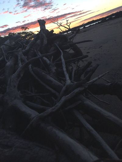 Nature Sunset Outdoors Sky No People Tree Beauty In Nature Scenics Tranquility Landscape Day Close-up Sand Dune EyeEm Nature Lover Art Is Every Where Beach Roots Of Life Roots Dead Tree Beauty In Nature Brisbaneeyeem EyeEmNewHere Tree Break The Mold