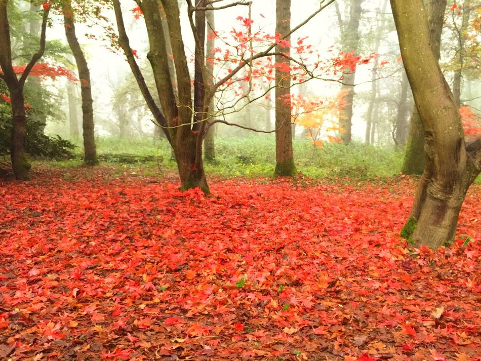 Winkworth Arboretum National Trust. Surrey. Taken with an iPhone. Nationaltrust Surrey Autumn Trees Leaves