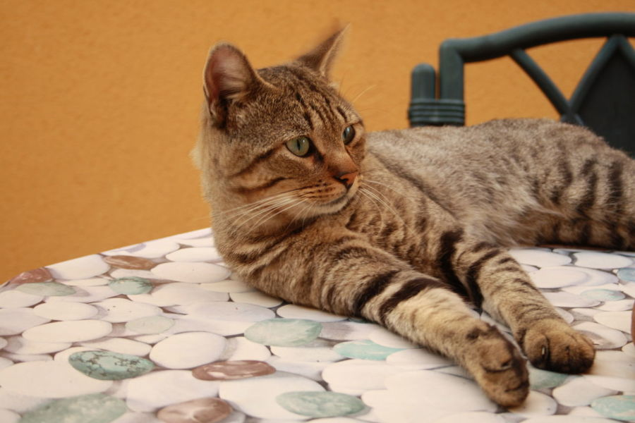 Animal Themes Day Domestic Animals Domestic Cat Feline One Animal Pets Relaxation