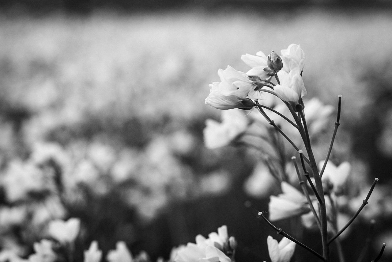 Beautiful flowers Flower Nature Fragility Plant Petal Flower Head Uncultivated Outdoors Focus On Foreground Day Growth Close-up Beauty In Nature Freshness No People Macro The Great Outdoors - 2017 EyeEm Awards Tranquil Scene Nature Selective Focus Canon70d Tree Area Fineart_photo Canon Canonphotography