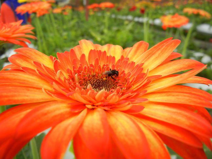 Let it bee.