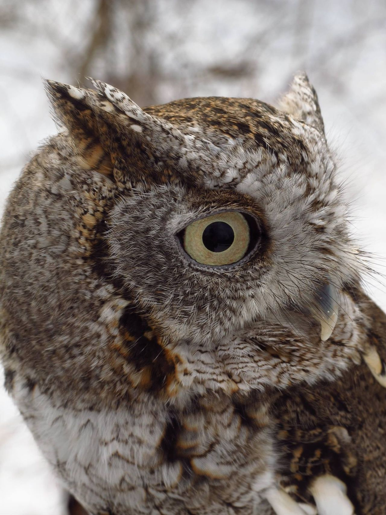 Beautiful stock photos of owl, , Animal Themes, Animals In The Wild, Awl