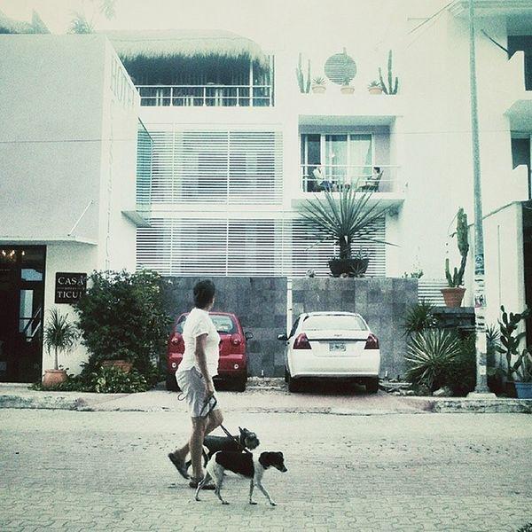 Так и живем Playadelcarmen Omgmexico2014 Dog Instatravel holiday photooftheday travelgram travel instagood mexico