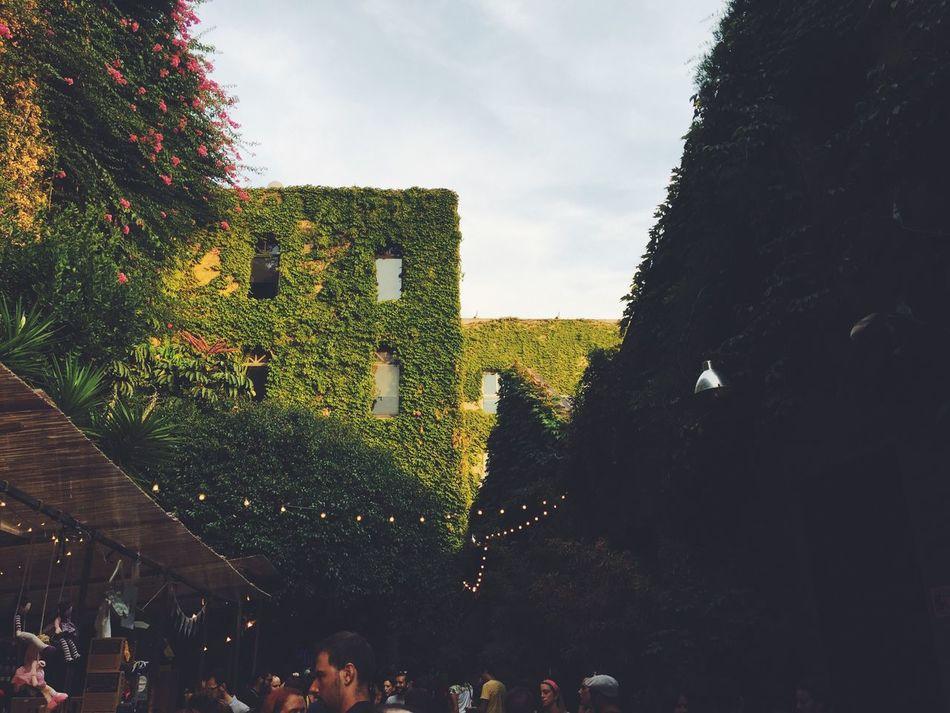 Palo Algo Market BCN Market Design Architecture Barcelona Designers First Eyeem Photo