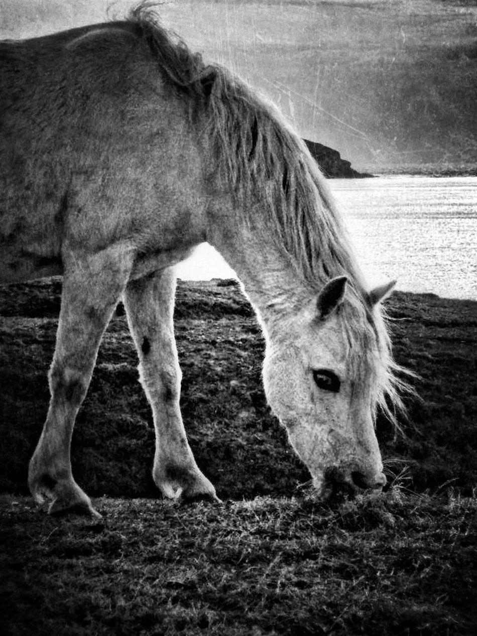 HorseNAround