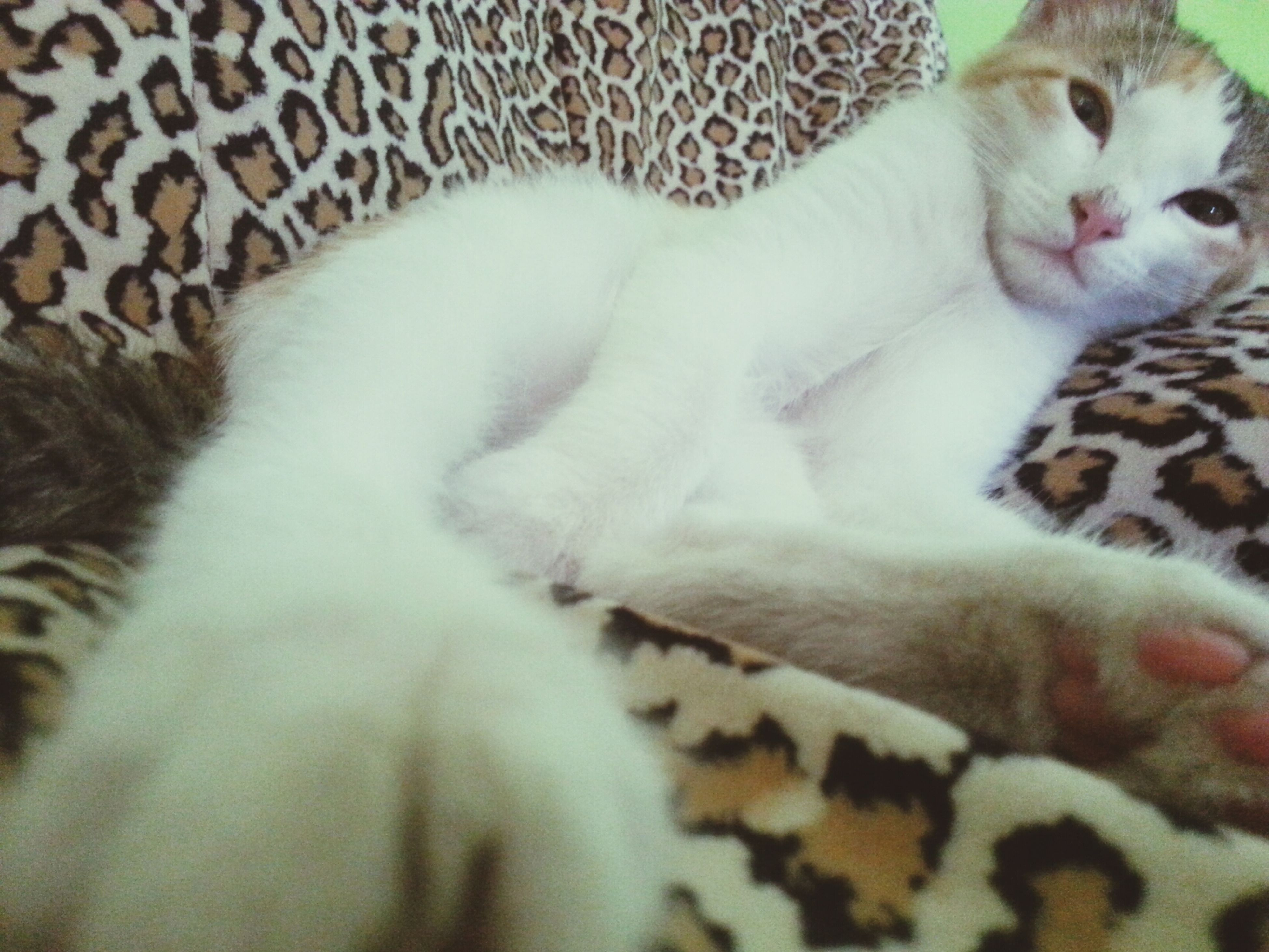 animal themes, domestic cat, cat, pets, mammal, feline, domestic animals, indoors, relaxation, one animal, resting, lying down, sleeping, bed, whisker, close-up, eyes closed, home interior, comfortable, two animals