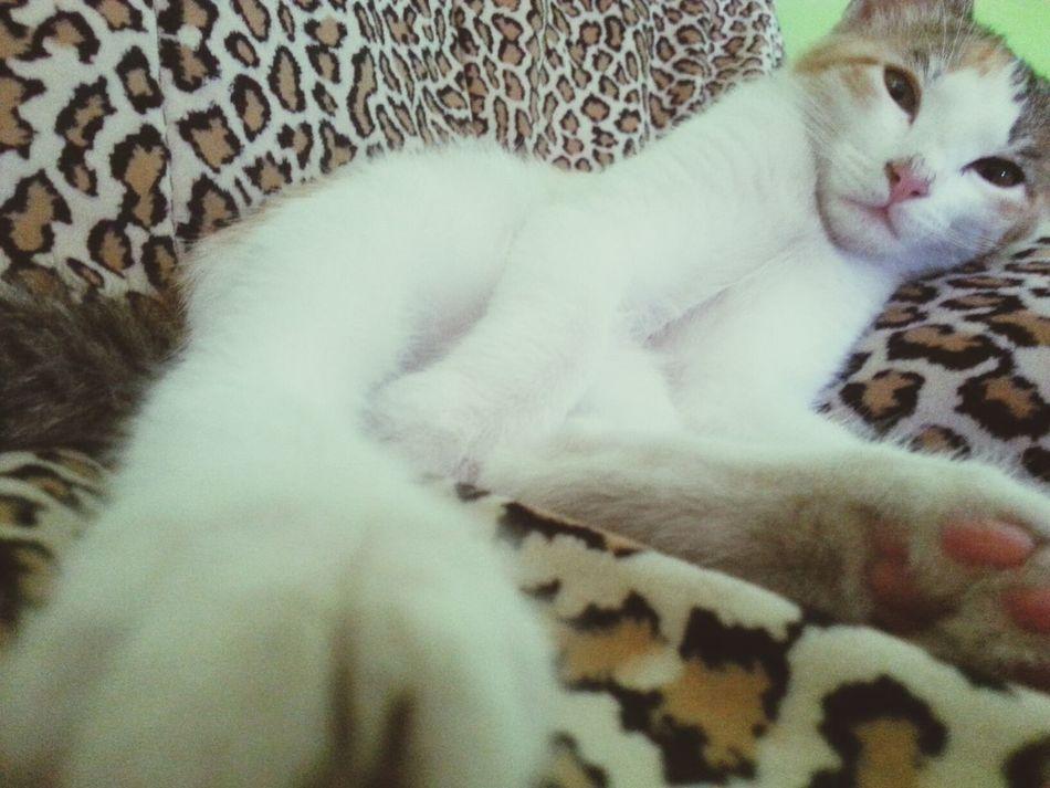 Cat Lovely Kitten