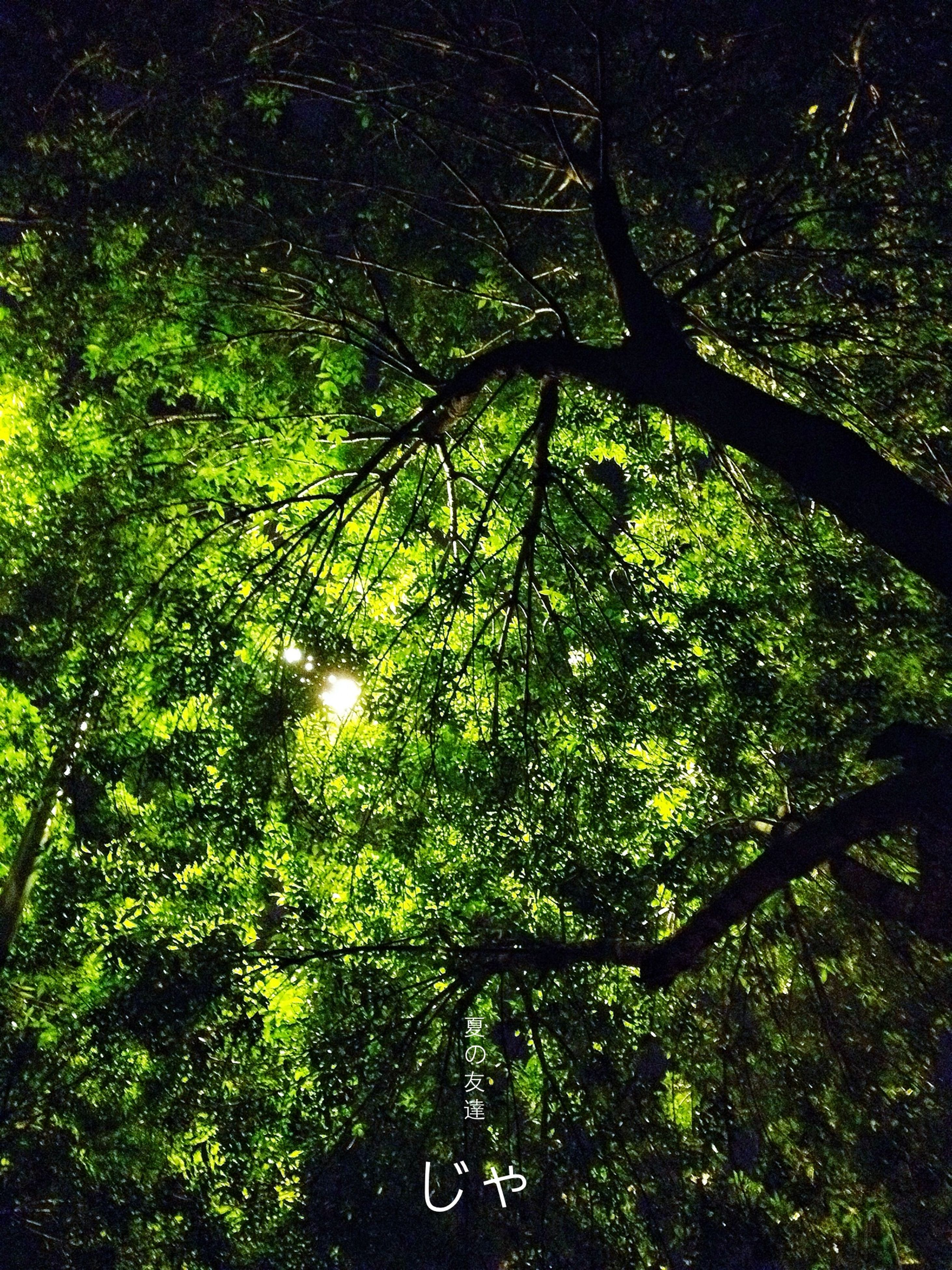 tree, growth, low angle view, branch, green color, sunlight, tranquility, nature, leaf, tree trunk, forest, night, beauty in nature, outdoors, lush foliage, no people, shadow, tranquil scene, lens flare