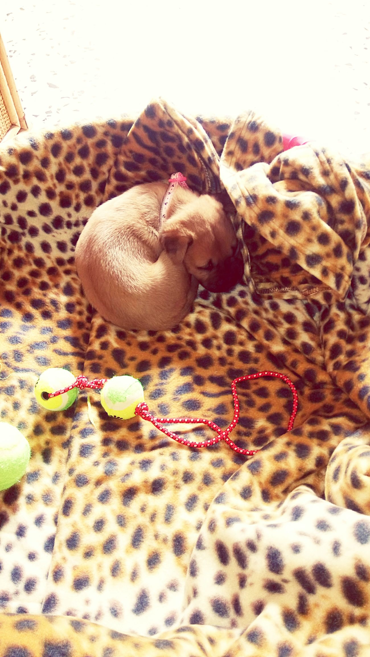 Cucù Mybaby❤ Babydog Cutie Beautiful ♥