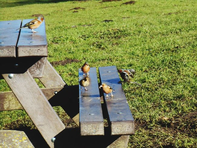 Field Peaceful Grass Park - Man Made Space Outdoors Park Bench No People Bird Photography Quiet Green Bench Park Taking Off Flying Bird Eating