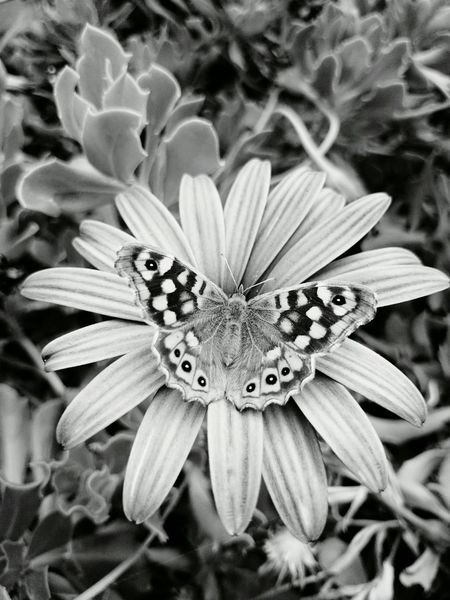 Flowers Blackandwhite Hello World Betterfly Nature Good Morning