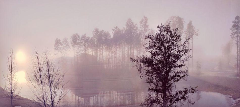Foggy morning Tree Fog Outdoors Lake Nature Water Beauty In Nature Morning View Mornings Morning Glory Morning Mist Sunrise - Dawn TCPM Break The Mold