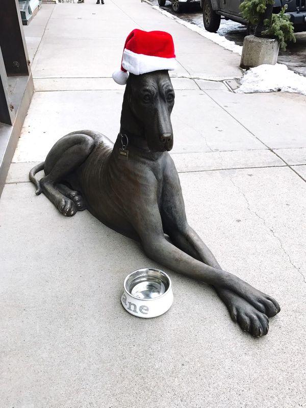 Skitrip Outdoors Animal Themes Pets Dog Platz Greatdane Telluride Colorado Downtown Newyearseve 🎉💝