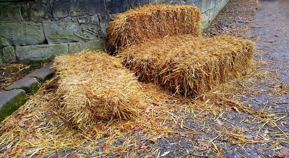Cleaning Equipment Day Dried Grasses Drying Fresh Hay Bales Hay Hay Bale Hay Bales Nature No People Outdoors Warwick Castle