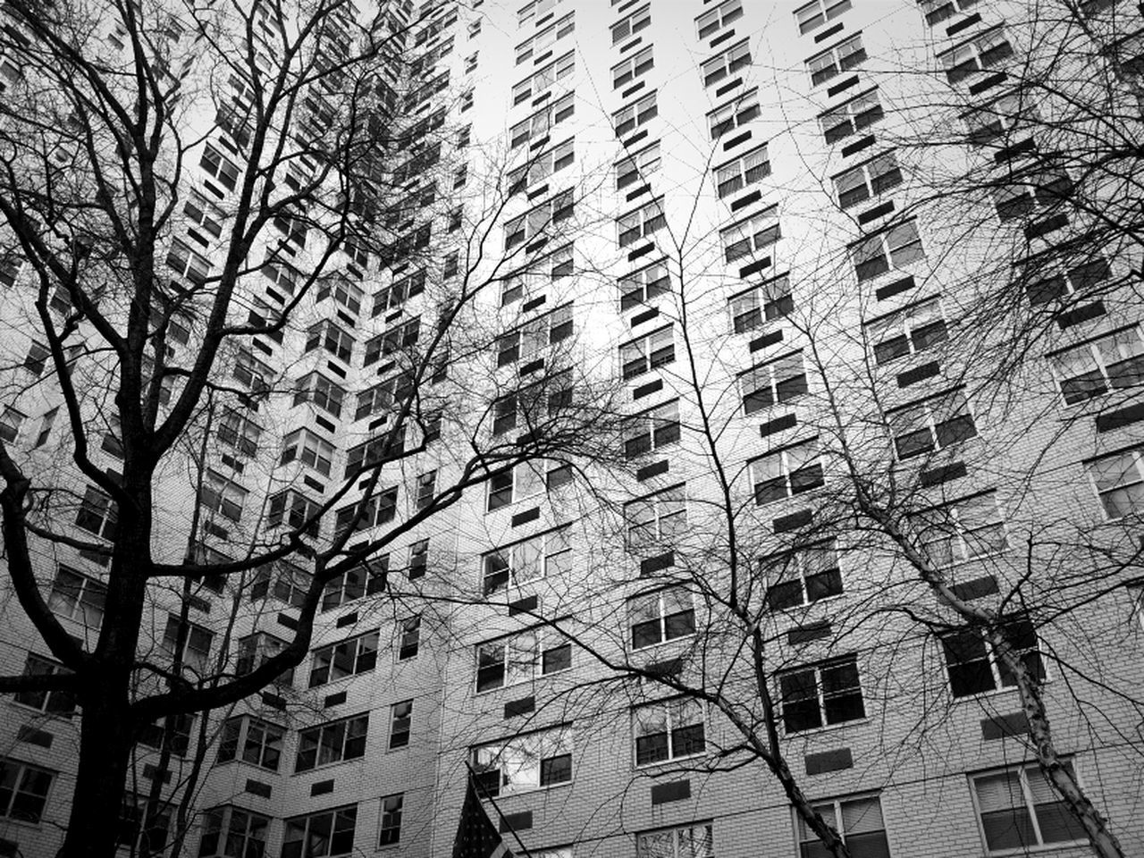 architecture, building exterior, low angle view, built structure, window, day, growth, no people, residential building, city, outdoors, tree, skyscraper