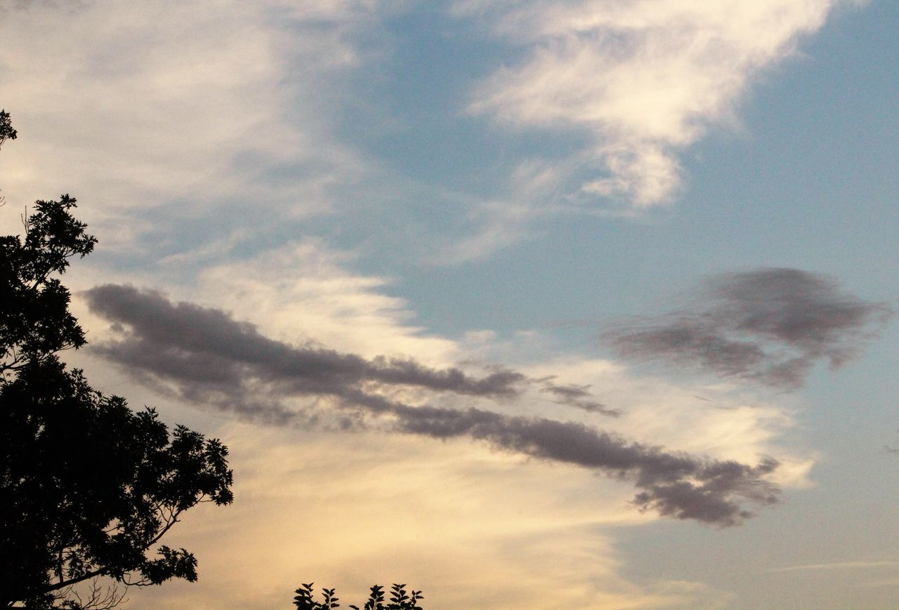 tree, sky, nature, low angle view, beauty in nature, cloud - sky, scenics, outdoors, no people, tranquility, silhouette, growth, day