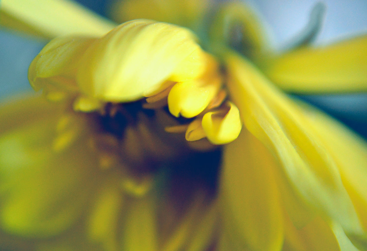 Close-up Day Flower Flower Head Flower Petal Macro Macro Nature Macro Photography No People Petal Springtime Yellow