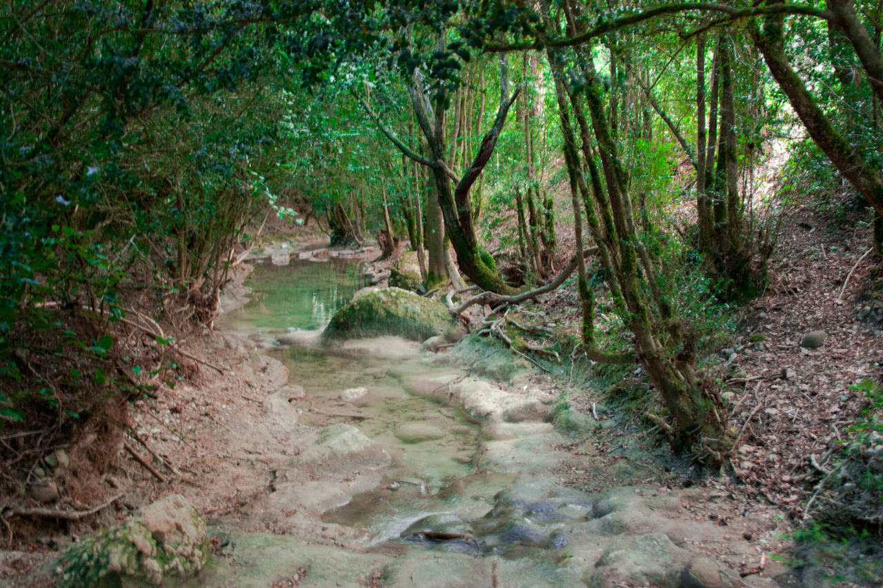 forest, tree, nature, no people, plant, outdoors, river, stream - flowing water, scenics, lush foliage, landscape, day, water, tranquil scene, tranquility, beauty in nature, waterfall, the natural world, sky