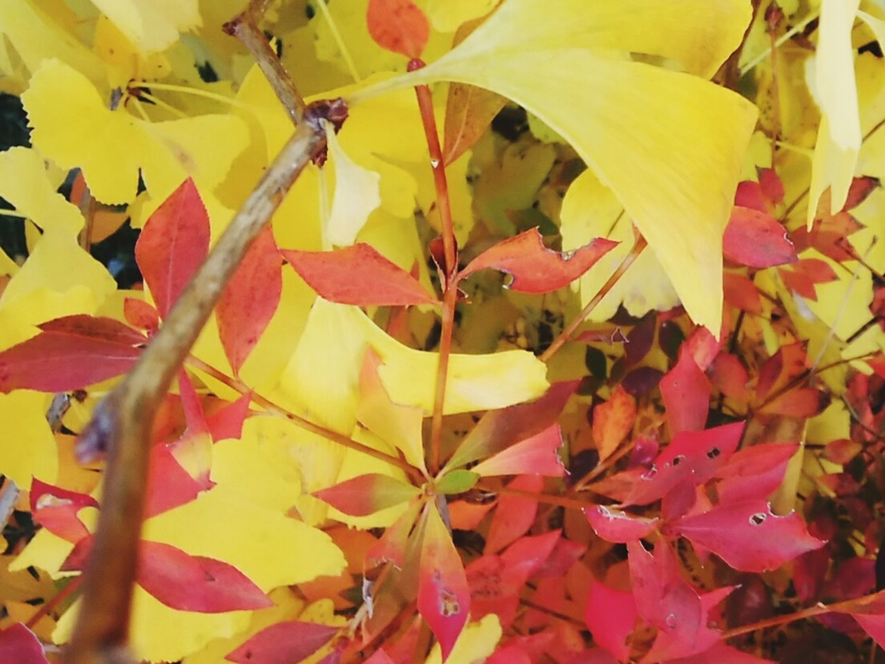 Yellow Close-up No People Autumn Leaf Multi Colored Backgrounds Day Outdoors Fragility Nature Beauty In Nature