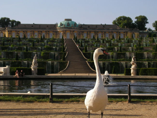 Potsdam Potsdam Park Sanssouci Enjoying Life Structure Architecture Taking Photos Nonfiltered No People Perspective Check This Out Famous Place The Architect - 2017 EyeEm Awards The Great Outdoors - 2017 EyeEm Awards Sommergefühle Pet Portraits Been There.